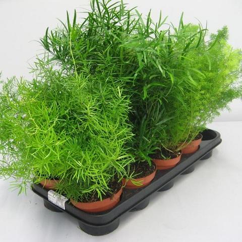 Растения – это не только красиво но и