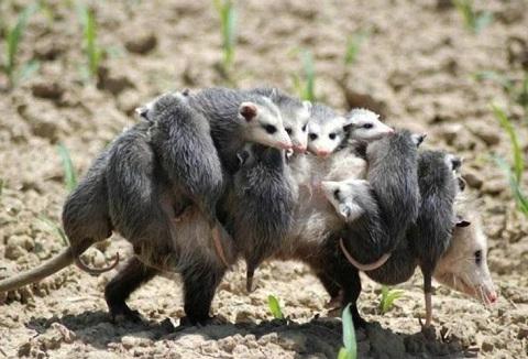 фото животных для детей: